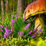 grzyb-wrzos-trawa-prawdziwek-jesien